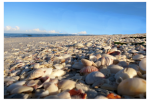 Beaches of sea shells